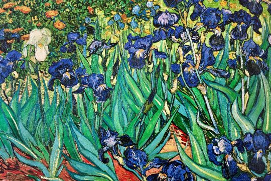 irises in saint remy de provence van gogh guided tour