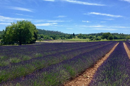 Tour to Avignon & Luberon villages
