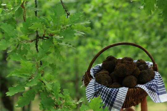 Gourmet Tour, Truffle hunt and Luberon